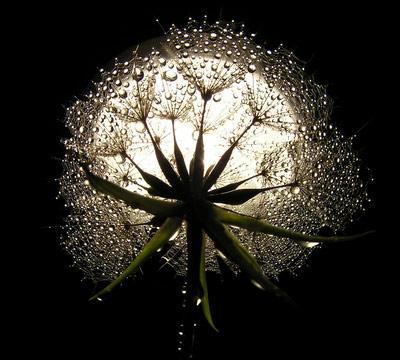 seed-moon-2