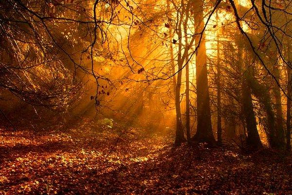 forest-autumn-golden-trees-light