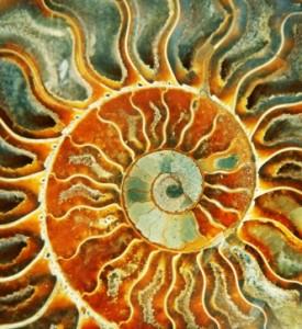 sunspiral-275x300