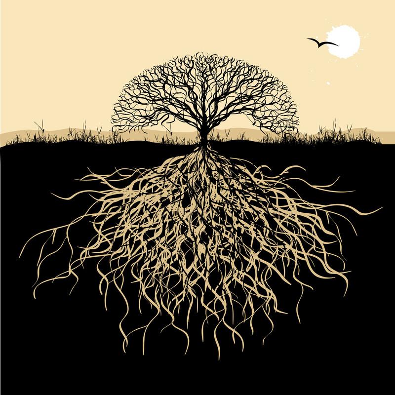 deeper roots b&w