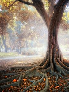 deeper-roots-autumn-2016